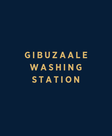 Gibuzaale Washing Station