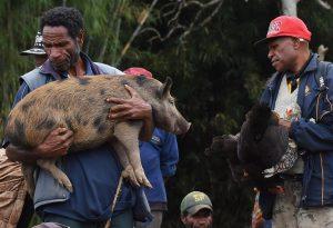 Hog prize