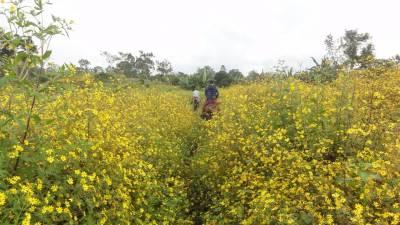 Ethiopia Sourcing Update